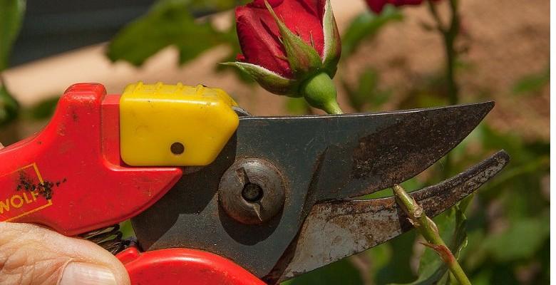 Conseils d'entretien des plantes pendant la saison hivernale