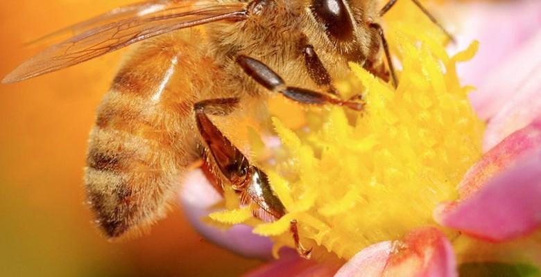 Peinture des ruches : quels sont les avantages des solutions écologiques ?