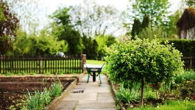 Aménagement de jardin : des conseils pour bien choisir son pépiniériste