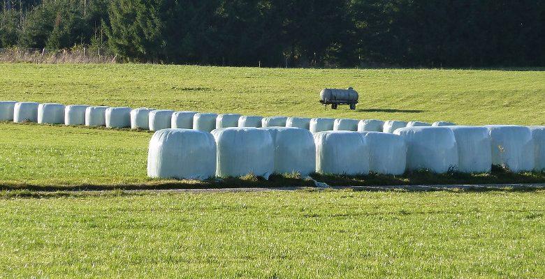 Agriculture : l'ensilage de maïs et le choix du silo