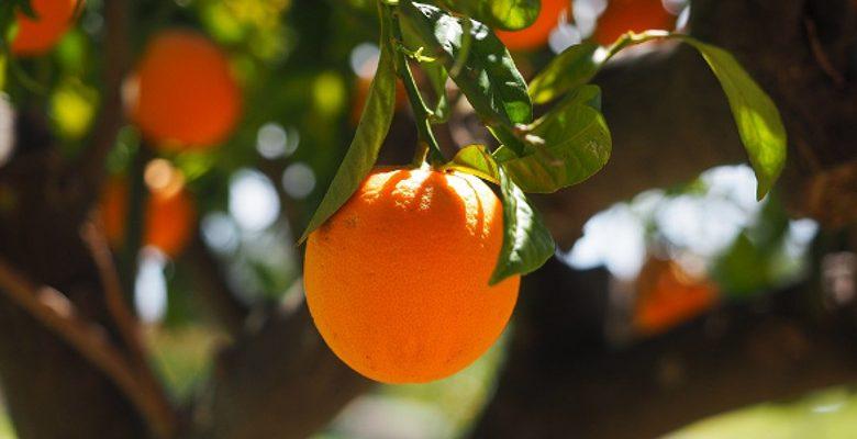 L'entretien des arbres fruitiers et des autres végétaux d'un jardin de ville