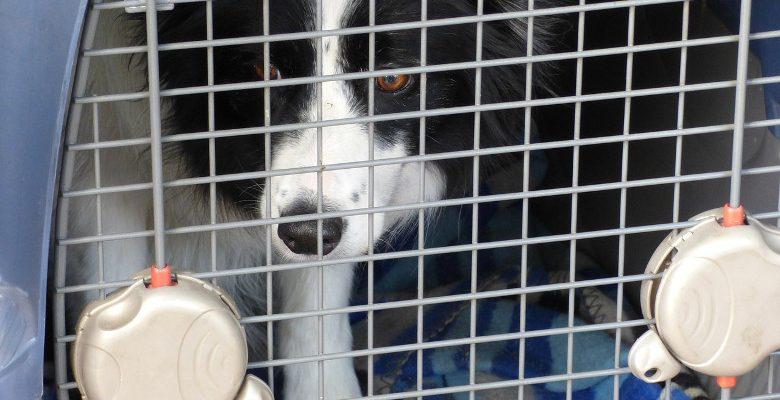 Transporter un chien : les critères pour bien choisir la cage