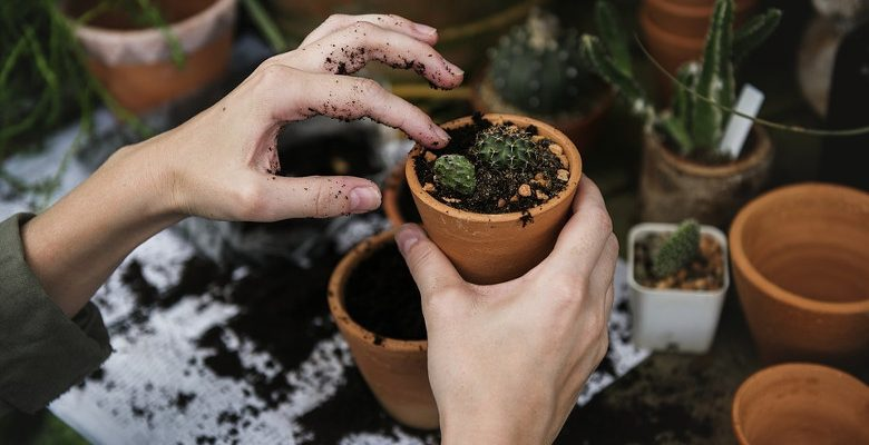 Entretien d'un petit jardin : choisir les plantes et les accessoires