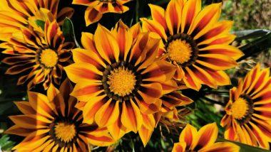 Les astuces d'un magazine maison et jardin